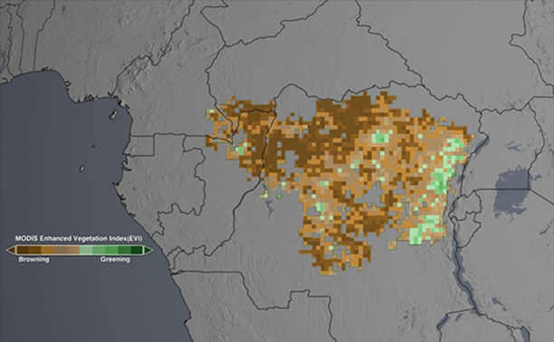 congo-rainforest-data